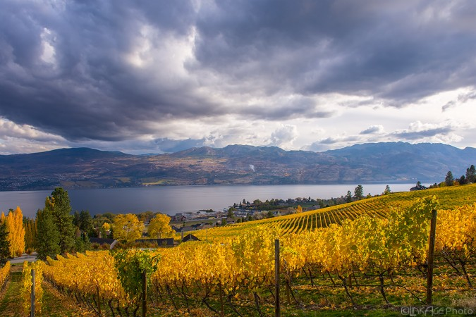 Stormy Autumn Vineyard 161022-6249
