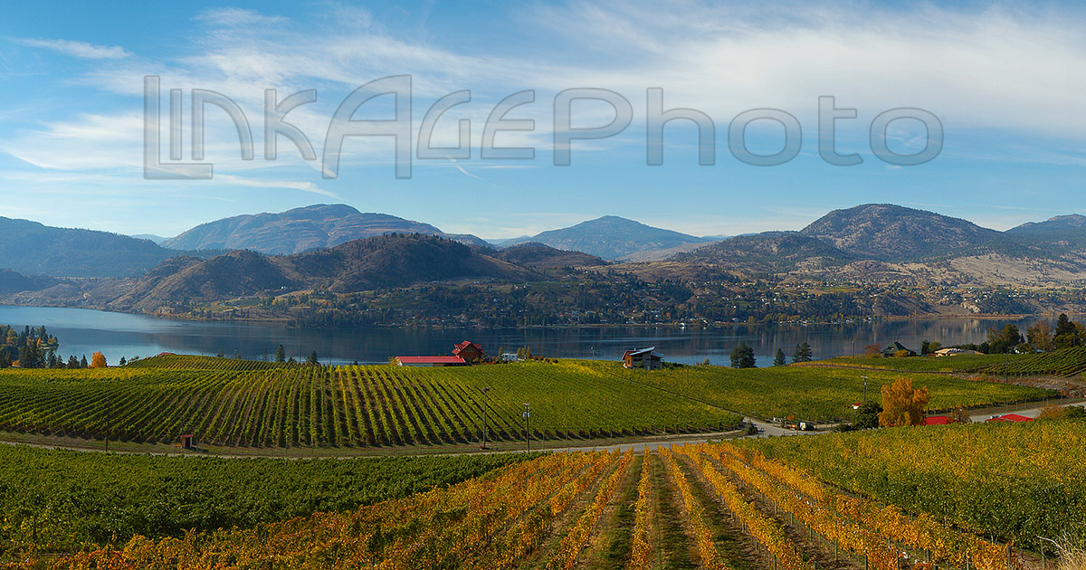 Autumn Over Blasted Church Vineyard 4670